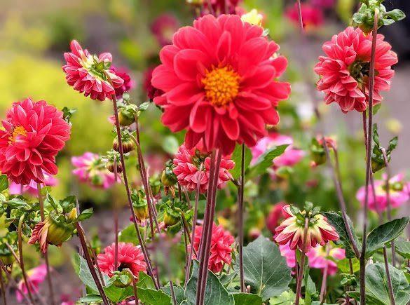 September in The Blackberry Garden
